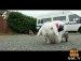 한 토끼의 휠체어