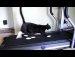 대박 고양이 모음