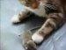 고양이 VS 쥐