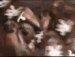 뉴욕 바퀴벌레 폭탄 투하!