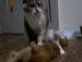 고양이한테 안마해주는 안마시술사^^*