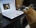 외국어가어려운 강아지 ~ 갸우뚱갸우뚱