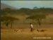 치타보다 빠른 사나이