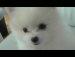 깨물어 주고 싶은 강아지 류