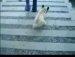 간지나게 계단 내려가기