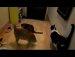 바퀴벌레 잡는 고양이들