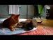 고양이들의 싸움장난