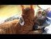 그루밍해주는 고양이