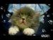아이 엠 스빠~르타~~고양이
